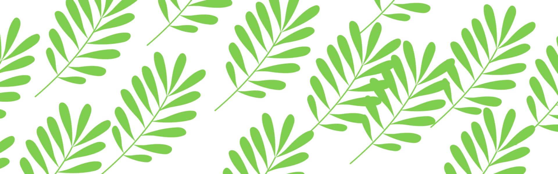 Klinika Salix